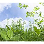Лекарственные травы +и растения