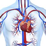 Здоровое сердце в твоих руках