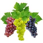 Виноград для беременных польза и вред