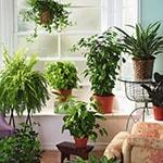 лечебные растения дома