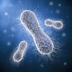сальмонеллез лечение антибиотиками