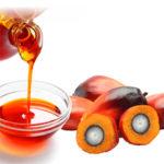 Вред пальмового масла для здоровья человека