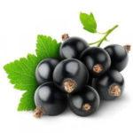 Польза чёрной смородины
